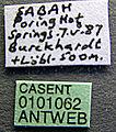 Acanthomyrmex concavus casent0101062 label 1.jpg