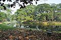 Acharya Jagadish Chandra Bose Indian Botanic Garden - Howrah 2011-01-08 9756.JPG