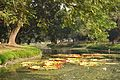 Acharya Jagadish Chandra Bose Indian Botanic Garden - Howrah 2011-01-08 9768.JPG