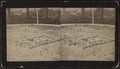 Aerial view of 'Hollywood' Long Branch, N.J, from Robert N. Dennis collection of stereoscopic views.png