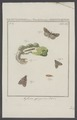 Aglossa - Print - Iconographia Zoologica - Special Collections University of Amsterdam - UBAINV0274 003 07 0002.tif