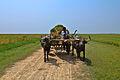 Agriculture of Bangladesh 7.jpg