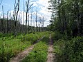 Air Line Trail at Spinning Mill Brook marsh.JPG