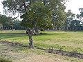 Akbari Sarai gardens.jpg