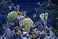 Akvarij - panoramio.jpg