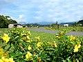 """Alamandas """"Curvas do Gasoduto"""" - panoramio.jpg"""