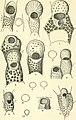 Allan Hancock Pacific expeditions. (Reports) (1943) (17923970986).jpg