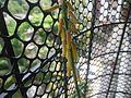 Aloe vera (3962423929).jpg