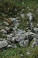 Alpine marmot - Marmota marmota - panoramio (2).jpg