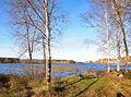Alvajärvi shore3.jpg