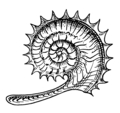 Ammonite (PSF).png