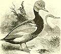 An illustrated manual of British birds (1889) (14562133117).jpg