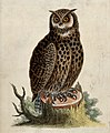 An owl sitting on the stump of a tree before a forest. colou Wellcome V0020561.jpg