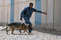 Anbar Police stand up K-9 unit DVIDS272341.jpg