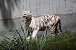 Animais do Zoo passam por exames periódicos (33895073775).JPG