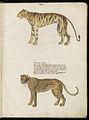 Animal drawings collected by Felix Platter, p2 - (141).jpg
