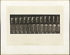 Animal locomotion. Plate 132 (Boston Public Library).jpg