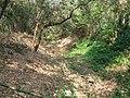 Annihilated Saraswati River near Ruined Nilkuthi at Manirampur in Hooghly 12.jpg