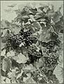 Annual report of the Fruit Growers' Association of Ontario, 1908 (1909) (19338248126).jpg