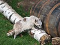 Antwerp Zoo (9691169083).jpg