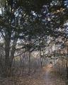 Appalachian Trail LCCN2011631216.tif