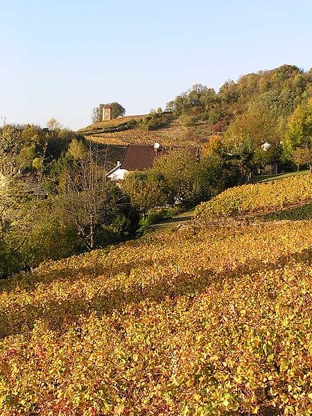 Fichier:Arbois vineyard tour Canoz.jpg
