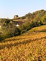 Arbois vineyard tour Canoz.jpg