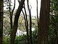 Ardargie pond - geograph.org.uk - 1241273.jpg