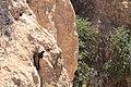 Ardillas - panoramio.jpg