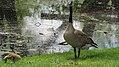 Assiniboine Park Zoo, Winnipeg (480466) (9444987583).jpg