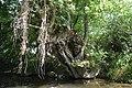 Auray (River)LeLochAmont de la Rivière d'AurayAout2018MorbihanLamiotMFL b 11.jpg
