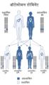 Autosomal dominant-hi.png