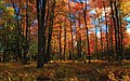 Autumn Tones (3) (9991468994).jpg