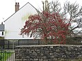 Autumn fruit still on the tree in February - geograph.org.uk - 704635.jpg