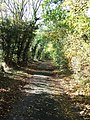 Autumn lane - geograph.org.uk - 588344.jpg