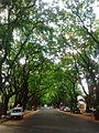 Avenida Melián 2.jpg