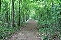 Avenue of trees - geograph.org.uk - 813115.jpg