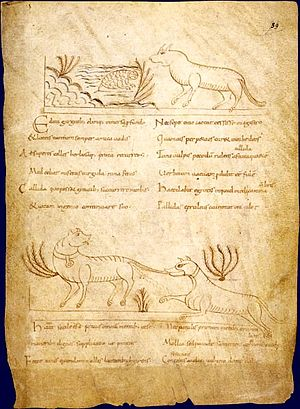 Avianus - 10th-century manuscript of Avianus' fables: The Frog Physician and The Mischievous Dog
