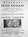 B.S. Albinus. Effigies Penis Humani. Wellcome L0007921.jpg