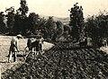 BASA-2072K-1-316-34-Plowing with horses in Bulgaria.jpg