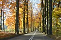 Back home the Schelmseweg is still very imposant with its autumn colours at 14-11 - panoramio.jpg