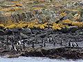Bahía Ushuaia 275.JPG