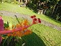 Balayan,Batangasjf0300 19.JPG