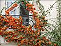 Balcon dune maison de style art nouveau (Nancy) (4266556755).jpg