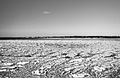Baltic Sea in black and white (8559281065).jpg