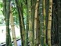 Bamboo with graffiti.jpg