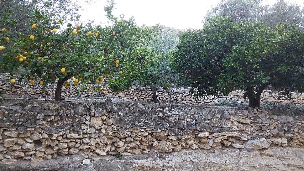 Bancales de Pinos del Valle