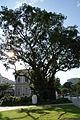 BanyanTree-NationalMuseumofSingapore-20100711-01.jpg