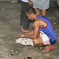 Barangay-Bulacao Cebu-City Philippines Cockfighting-event-11.jpg