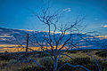 Bare tree at high desert sunset.jpg